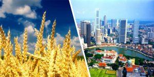 Соглашение Украина-Сингапур